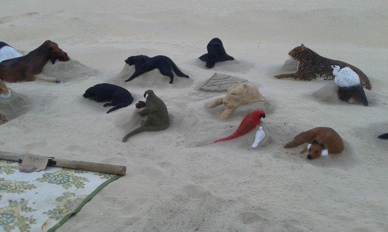sur la plage d arcachon !!!