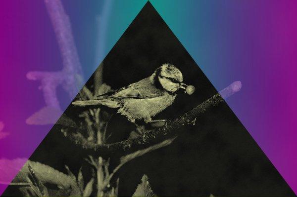 L'oiseaux de la paix ! ---- By Axelle