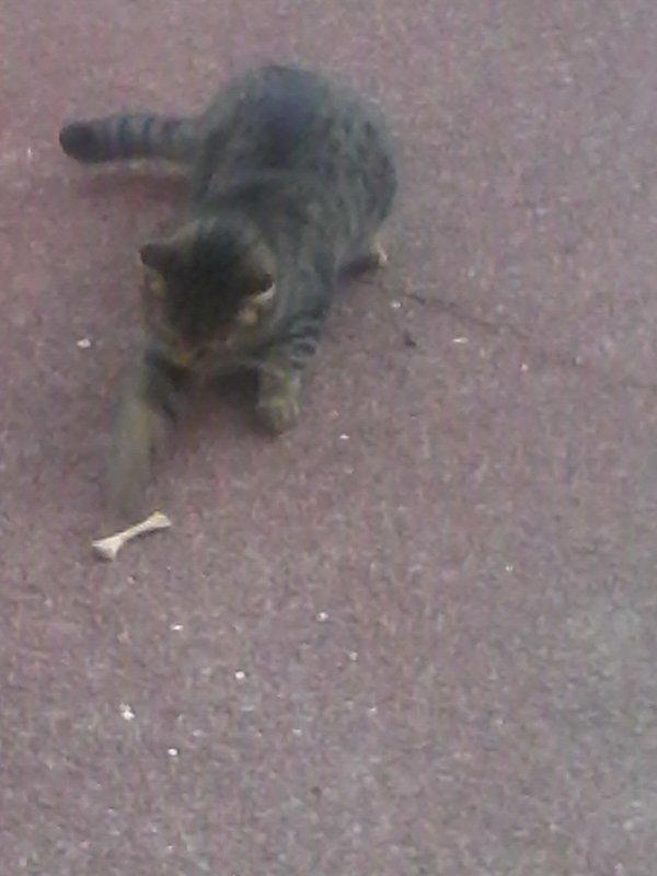 Mon chat , s'amuse
