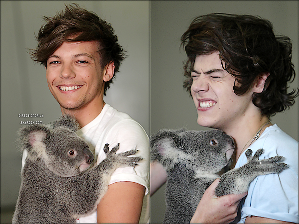 18 Avril 2012 - Les garçons ont posés avec le koala Kat au Lone Pine Koala Sanctuary à Brisbane !