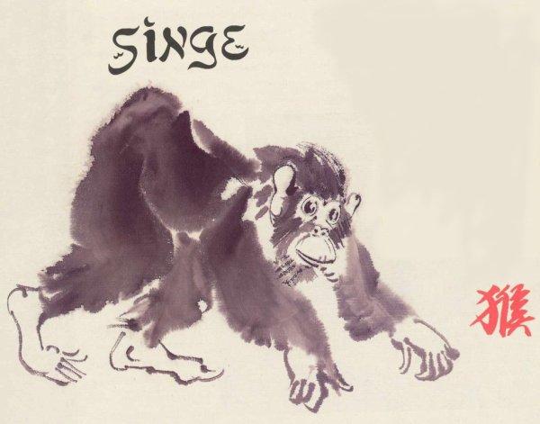 Signe 9 : Le singe !!