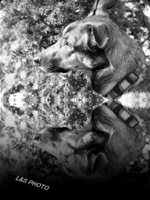 MONTAGE REFLEXION NOIR&BLANC