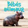 BebesAnimaux