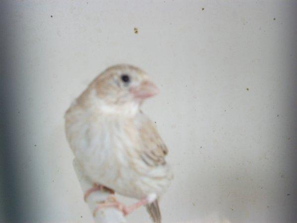 sortie du nid