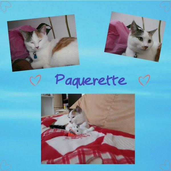 Photo montage : Paquerette