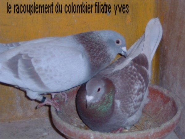imbrecht de cher jean Michel corbisez