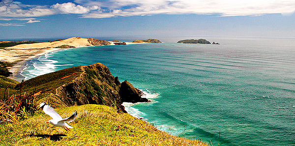 Wonders of NEW ZEALAND: the Te Paki sand dunes & the Cape Reinga