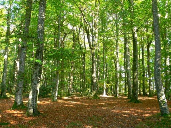 Des Forêts  (8154)