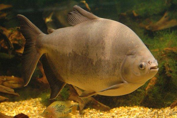 Des Poissons d'Aquariums  (8211)