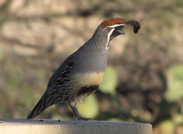 Des Oiseaux (10337)