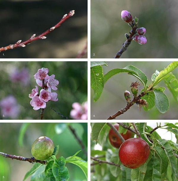 Des Fruits  (11478)