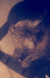 Mon chat <333