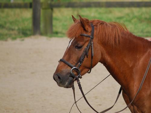 Manon-cheval-Passion