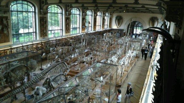 Musée histoire naturel