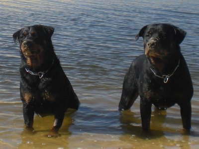 binga et eyros a l'ocean