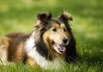 La vie d'un chien ! :'(