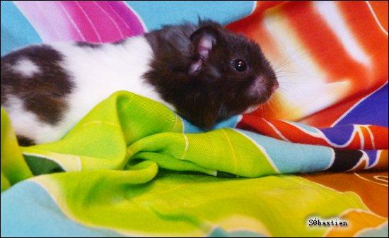 Il était une fois...un hamster.