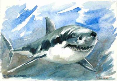 030 le grand requin blanc artiste peintre aquarelles huiles et acryliques - Dessin de grand requin blanc ...