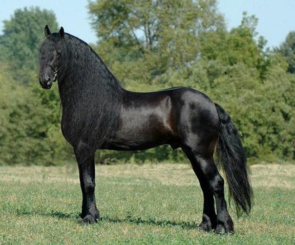 cheval noir sublime