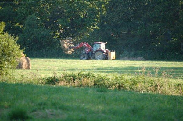 Dans les champs...