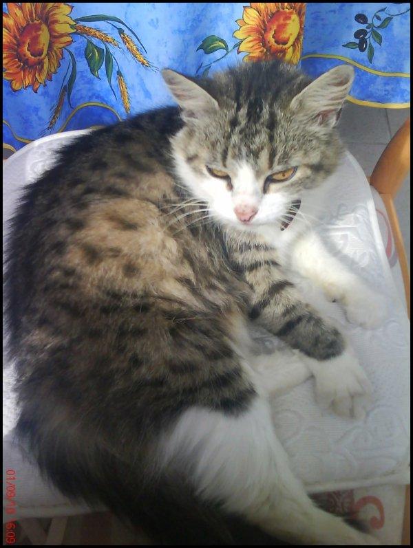 Mon Chat. (Moumoun)