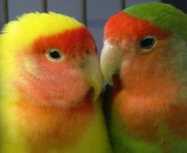 les-deux-inseparables