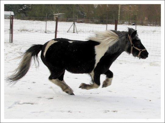 Les petits poneys