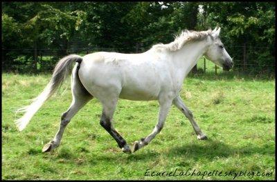 Les grands poneys et double-poneys