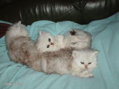 nous disposons du canapé
