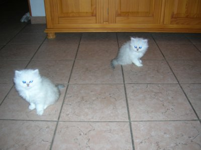 Snowbell et Bella