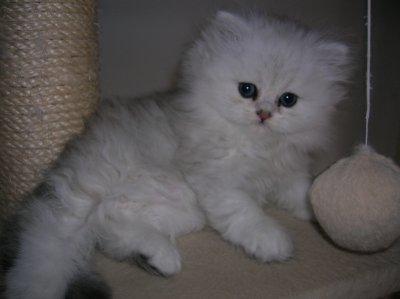 ce petit nounours c est Bella