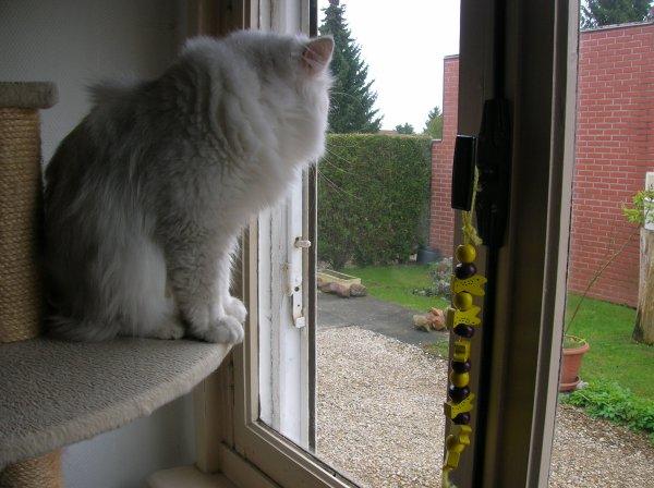 je suis à la recherche d un oiseau