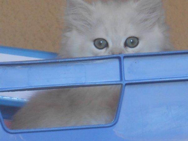 que de beaux yeux!!!