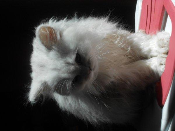 jungo fatigué d avoir pris un bain