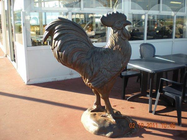 le coq de Criel sur mer qui est jumelé avec Havelange.