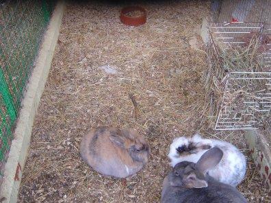 Les animaux du Parc de Roodebeek