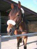 Photo de horses-otmik