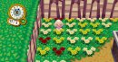Photo de animal-crossing-wii75