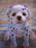 Photo de Nintendog59