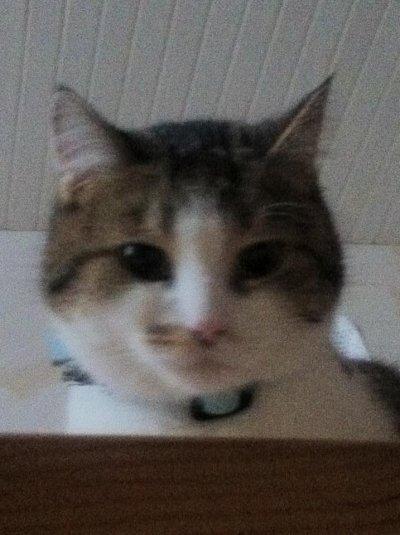 notre chat mimine qui nous surveiller des escalier
