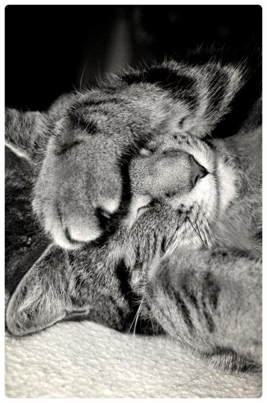 On peut juger de la grandeur d'une nation par la façon dont les animaux y sont traités.
