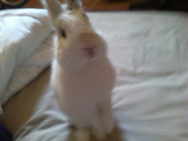 Voici mon lapin
