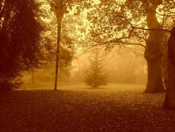 Matin d'automne
