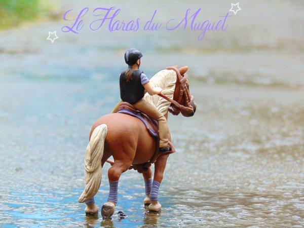 _-*Bienvenue au Haras du Muguet*-_