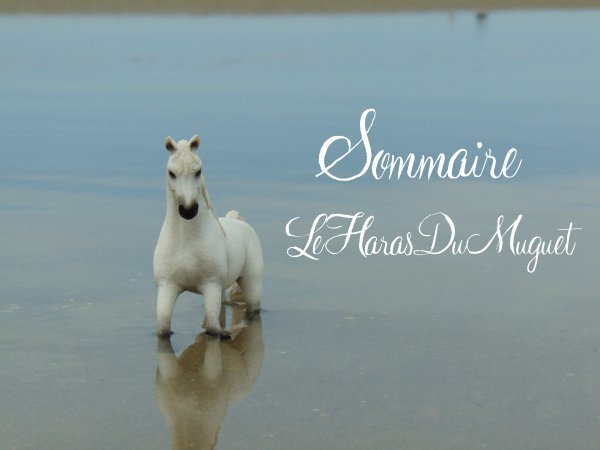 .-*Sommaire*-.