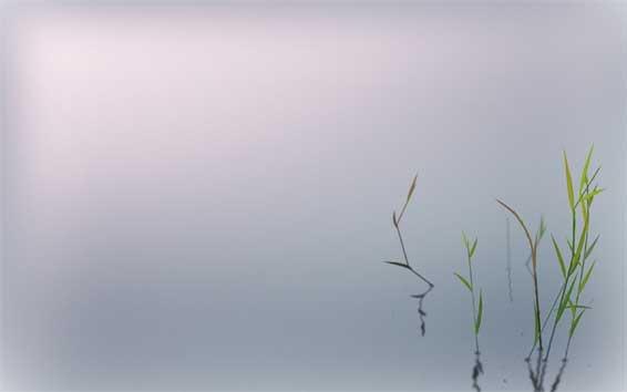 """""""L'eau trop claire est sans poisson; l'être trop méfiant est sans amour"""" Proverbe chinois"""