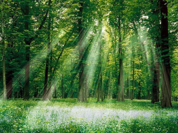 Sommet de Cancun: une solution contre la déforestation?