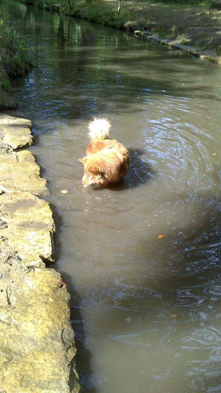 """Fluo cherche le poisson? Non """"la balle"""" ;) hihihi"""