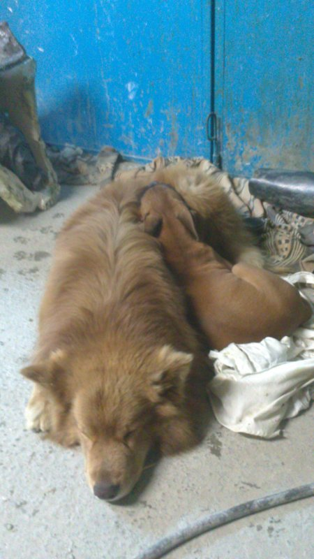 Un peu de temps donc aux nouvelles :) Bienvenue a ILKA soeur adoptive de fluo :)