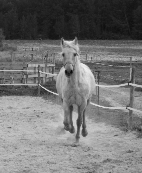 """Ainsi la prochaine fois que vous entendrez que c'est, """"simplement un cheval"""", contentez vous de sourire, parce qu'ils ne peuvent ... """"simplement"""" pas comprendre."""" ♥."""